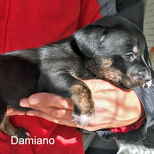 damiano_001.jpg