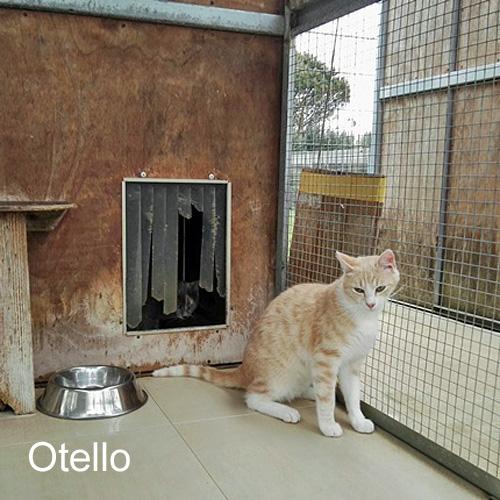 otello_001.jpg