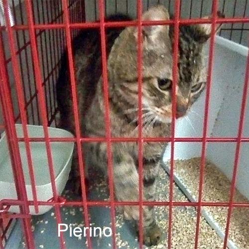 pierino_001.jpg