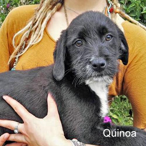 quinoa_001.jpg