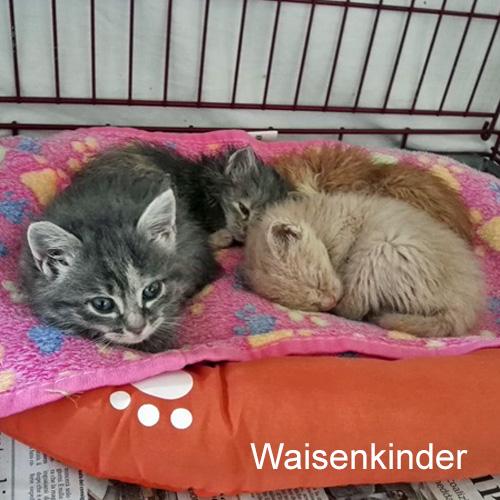 waisenkinder_001.jpg
