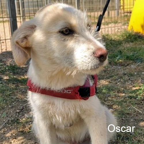 oscar_001.jpg