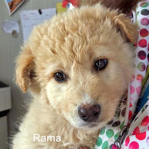 rama_001.jpg
