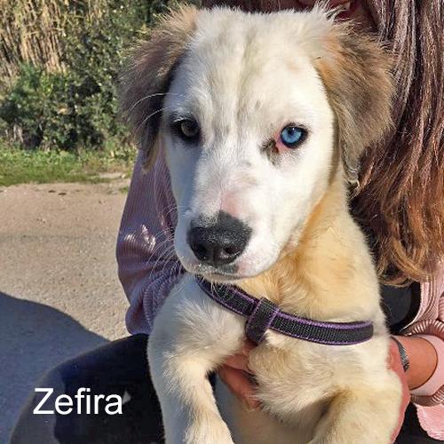 zefira_001.jpg