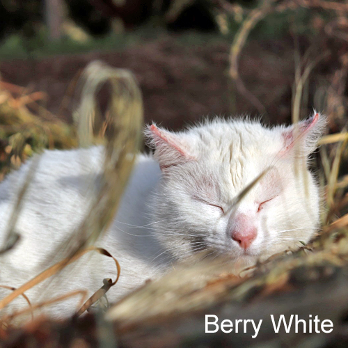 berry_white_001.jpg
