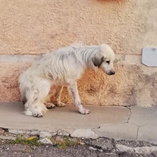 hund_001.jpg