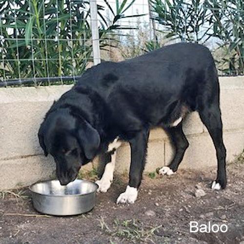 baloo_002.jpg