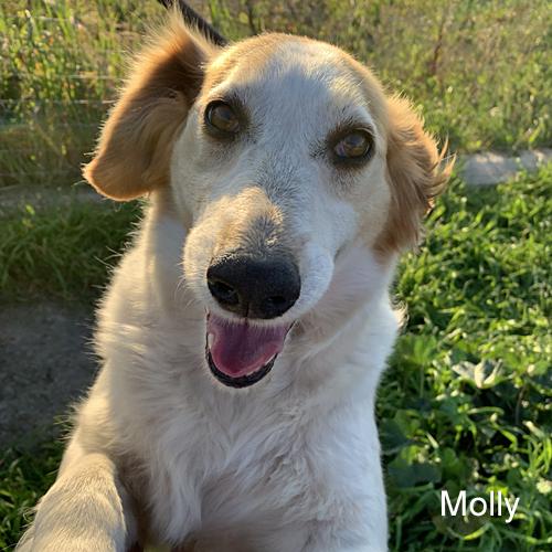 molly_002.jpg