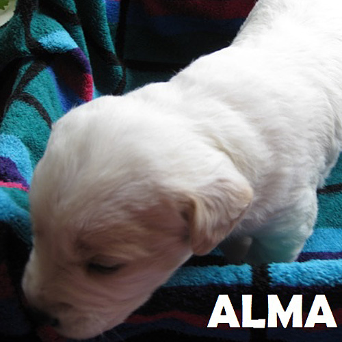alma_001.jpg