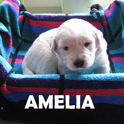 amelia_001.jpg