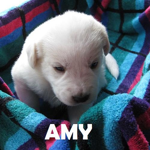 amy_001.jpg