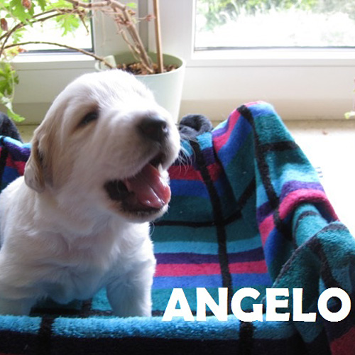 angelo_001.jpg
