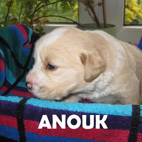 anouk_001.jpg
