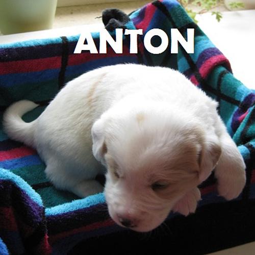 anton_001.jpg