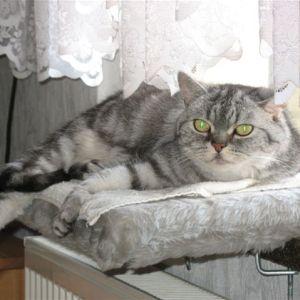 kitty_02.jpg