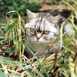 kitty_04.jpg