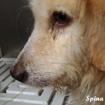 spina_03.jpg