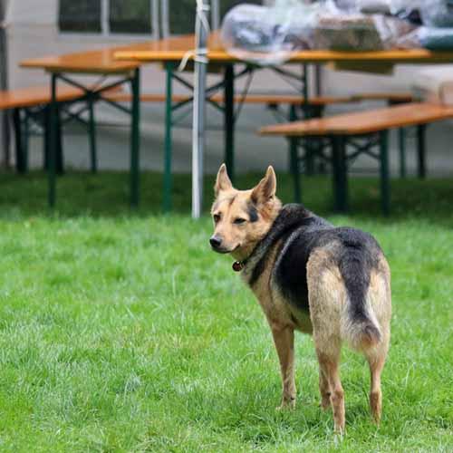 Aufbau_Hunde_033.jpg