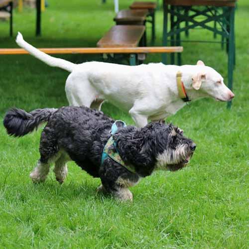 Aufbau_Hunde_035.jpg