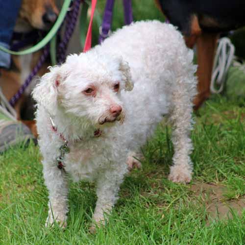 Sommerfest_Hunde_010.jpg