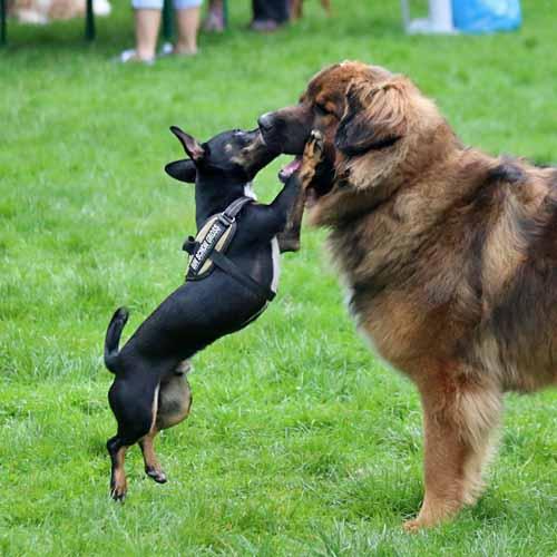 Sommerfest_Hunde_038.jpg