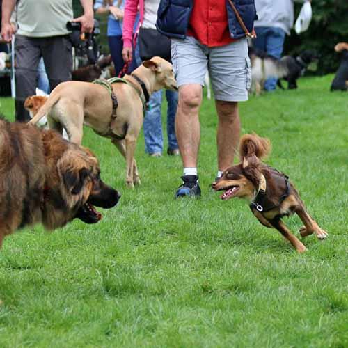 Sommerfest_Hunde_052.jpg