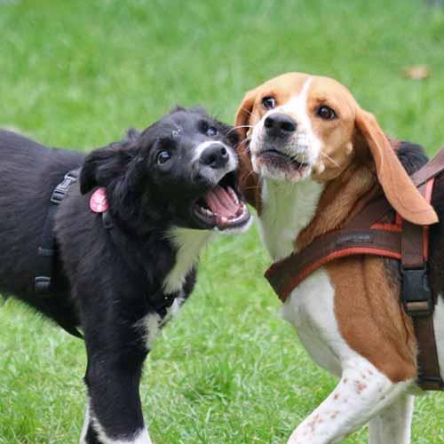 Sommerfest_Hunde_061.jpg