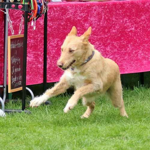 Sommerfest_Hunde_065.jpg