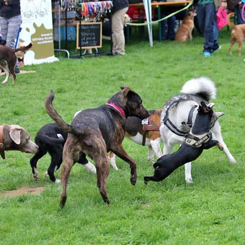 Sommerfest_Hunde_068.jpg