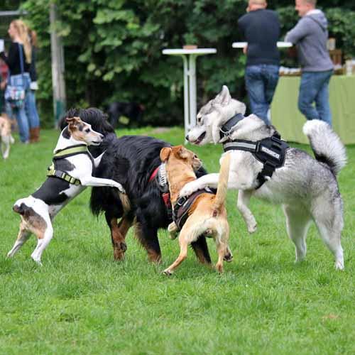 Sommerfest_Hunde_069.jpg