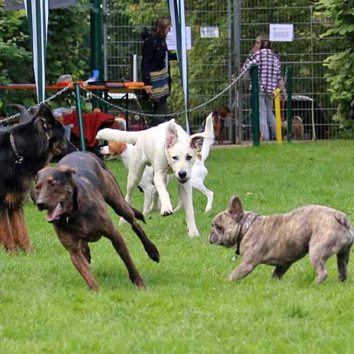 Sommerfest_Hunde_074.jpg