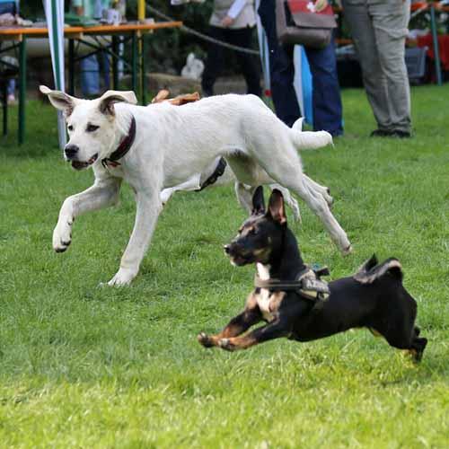 Sommerfest_Hunde_077.jpg