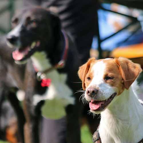 Sommerfest_Hunde_079.jpg