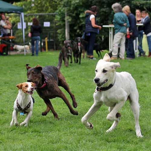Sommerfest_Hunde_082.jpg