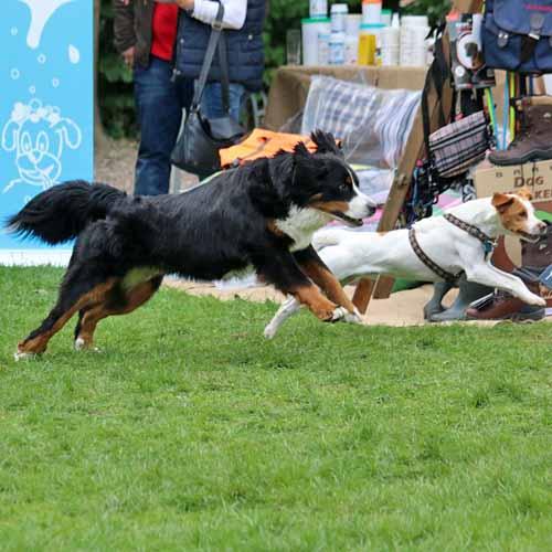 Sommerfest_Hunde_085.jpg