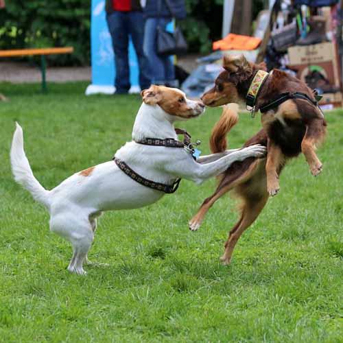 Sommerfest_Hunde_086.jpg