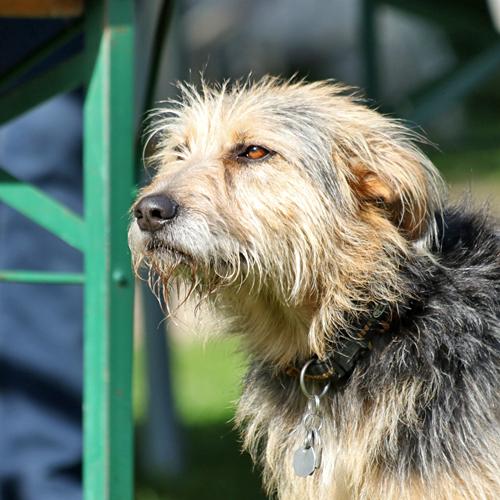 Sommerfest_Hunde_2015-08-23-09h17m58.jpg