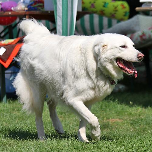 Sommerfest_Hunde_2015-08-23-10h26m38.jpg