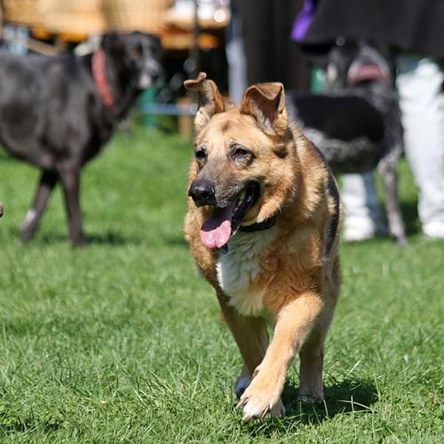 Sommerfest_Hunde_2015-08-23-10h26m43.jpg