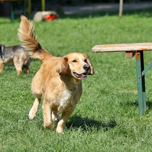 Sommerfest_Hunde_2015-08-23-10h29m55.jpg