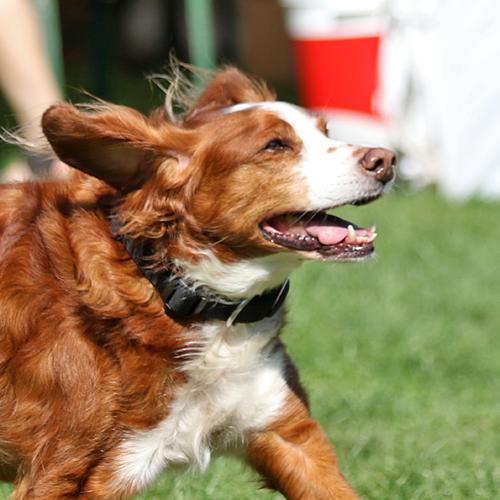 Sommerfest_Hunde_2015-08-23-10h36m38.jpg