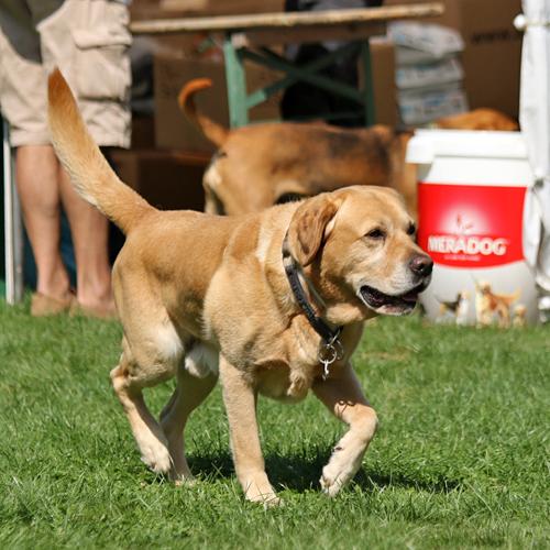 Sommerfest_Hunde_2015-08-23-11h09m07.jpg