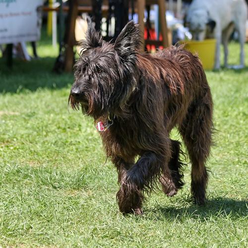 Sommerfest_Hunde_2015-08-23-11h11m07.jpg