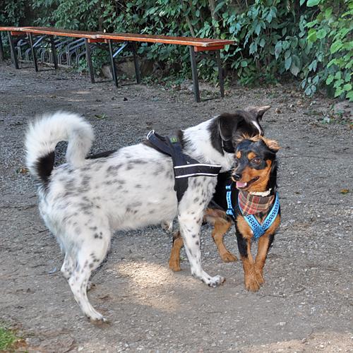 Sommerfest_Hunde_2015-08-23-11h14m39.jpg