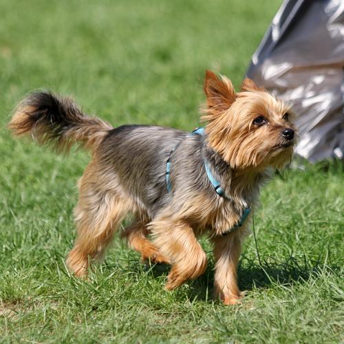 Sommerfest_Hunde_2015-08-23-11h20m33.jpg
