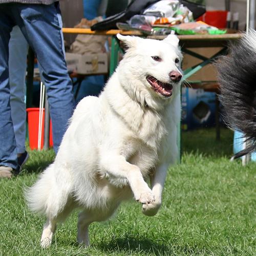 Sommerfest_Hunde_2015-08-23-11h28m00.jpg