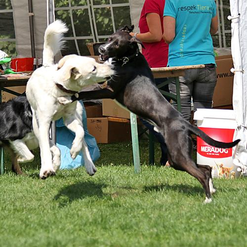Sommerfest_Hunde_2015-08-23-11h28m17.jpg