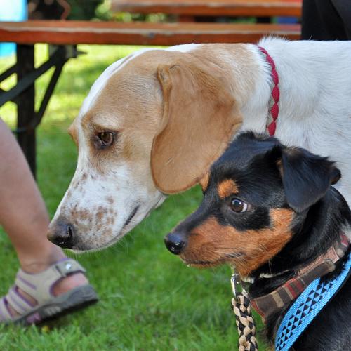 Sommerfest_Hunde_2015-08-23-11h28m32.jpg
