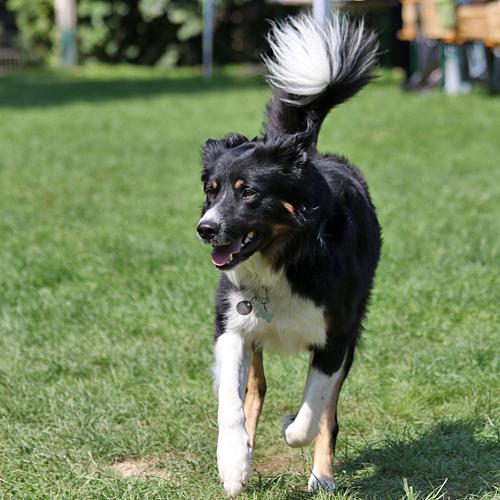 Sommerfest_Hunde_2015-08-23-11h29m01.jpg