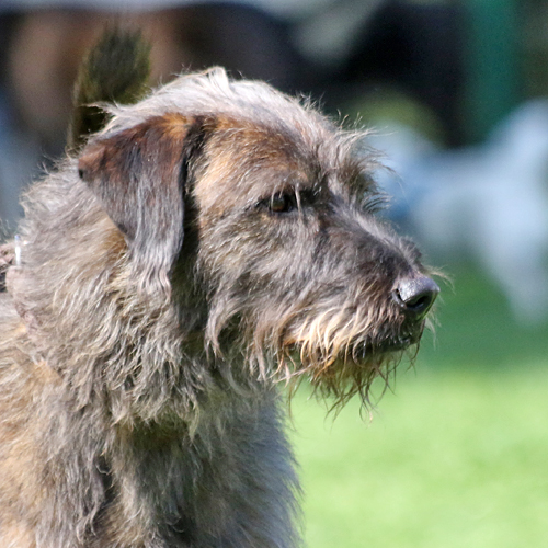 Sommerfest_Hunde_2015-08-23-11h31m56.jpg